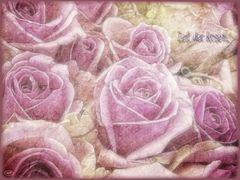 Zeit der Rosen...