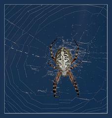 Zeit für(s) Spinnen..