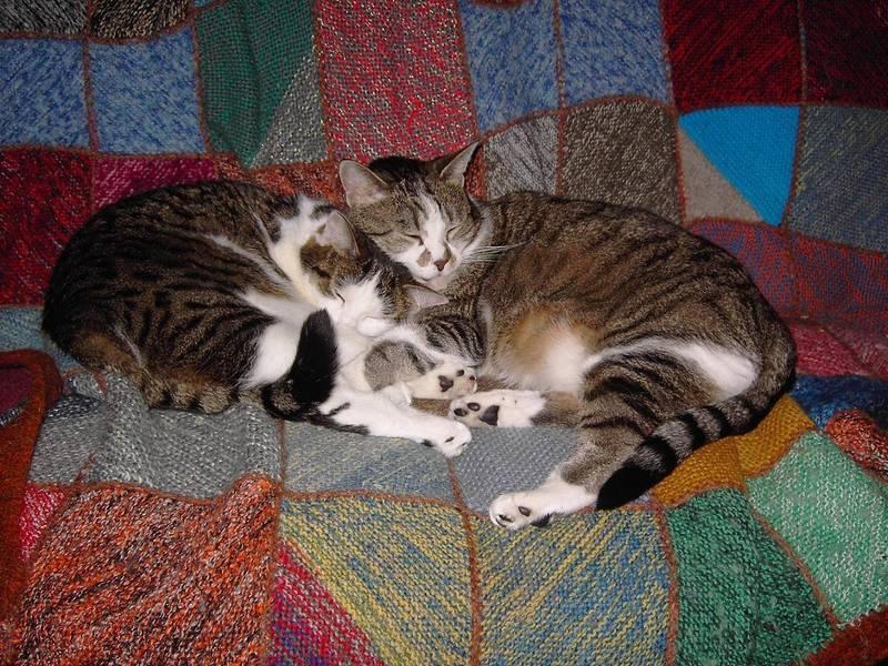 zeit zum kuscheln foto bild tiere haustiere katzen bilder auf fotocommunity. Black Bedroom Furniture Sets. Home Design Ideas