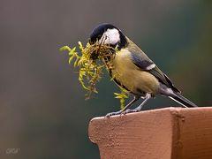 Zeit zum Nestbau