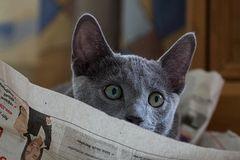 Zeitung lesen kann er schon
