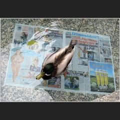 Zeitungsente