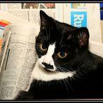Zeitungskatze