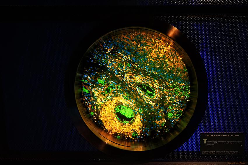 Zellen des Immunsystem