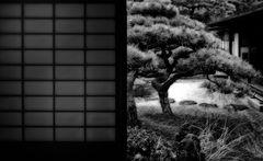 zen.emotions