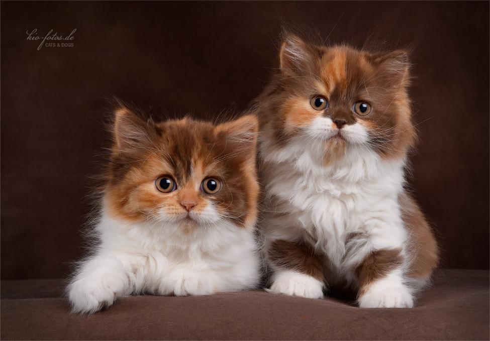 Zenmai & Zoe ;)