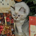 Zeno´s erste Weihnachten