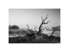 Zerfallener Baum