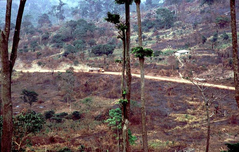 Zerstörung der Regenwälder in Westafrika