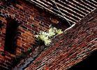 Zerzaustes Mauerblümchen