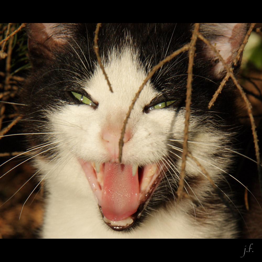 ziemlich gefährliches kleines Kätzchen ...