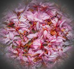 zierkirschenblütenaufbahrung...