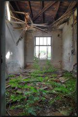 ...ZimmerPflanzen...
