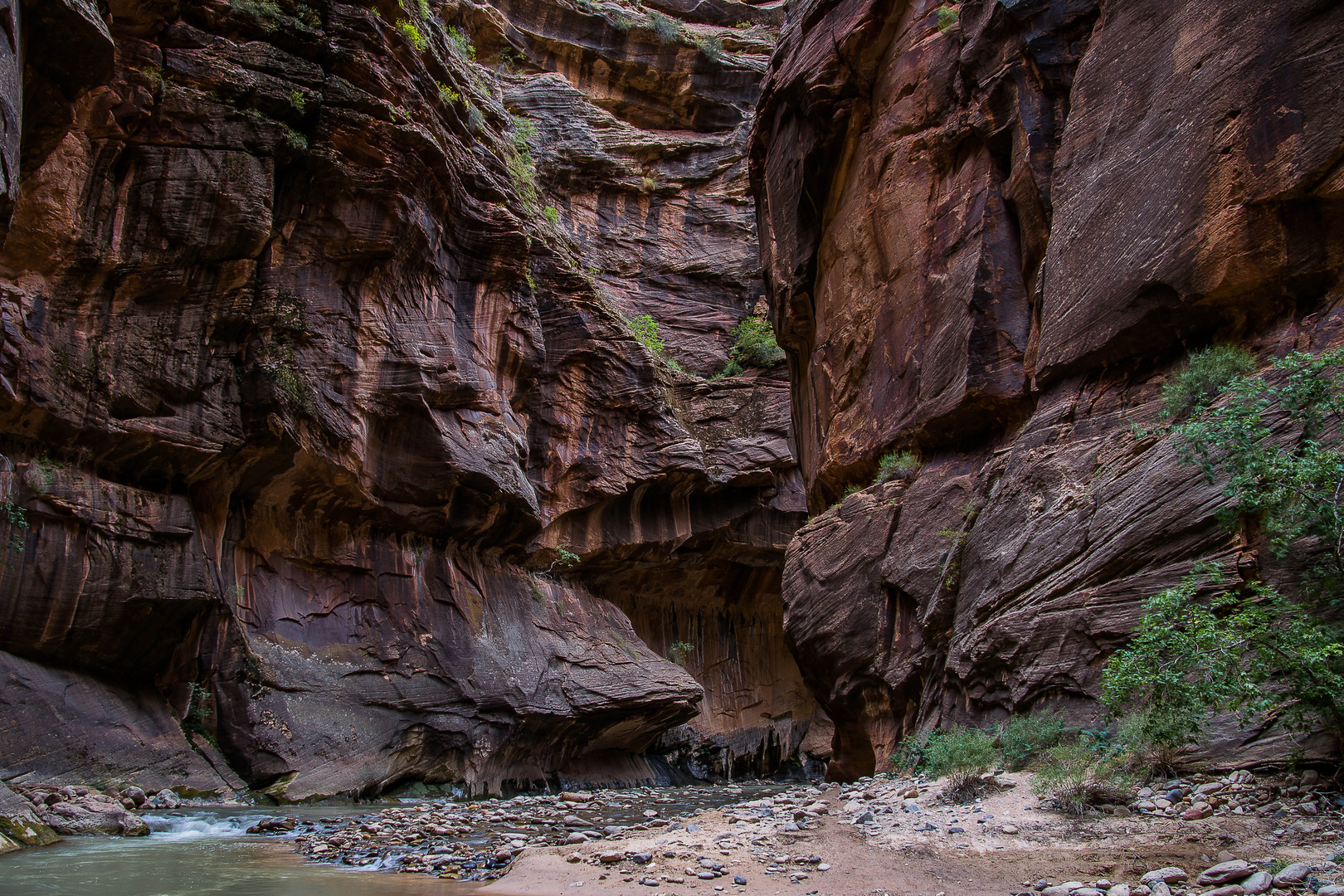 Zion NP - Narrows 6