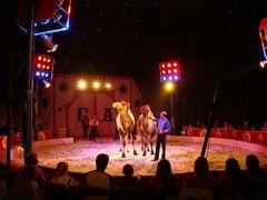 Zirkus [5]