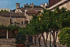 Zitronenbäume in Arta Mallorca