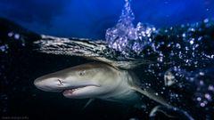 Haitauchen