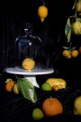 Zitrusfrüchtestillleben