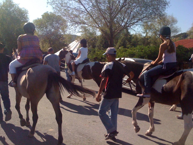 z.köy atlı spor