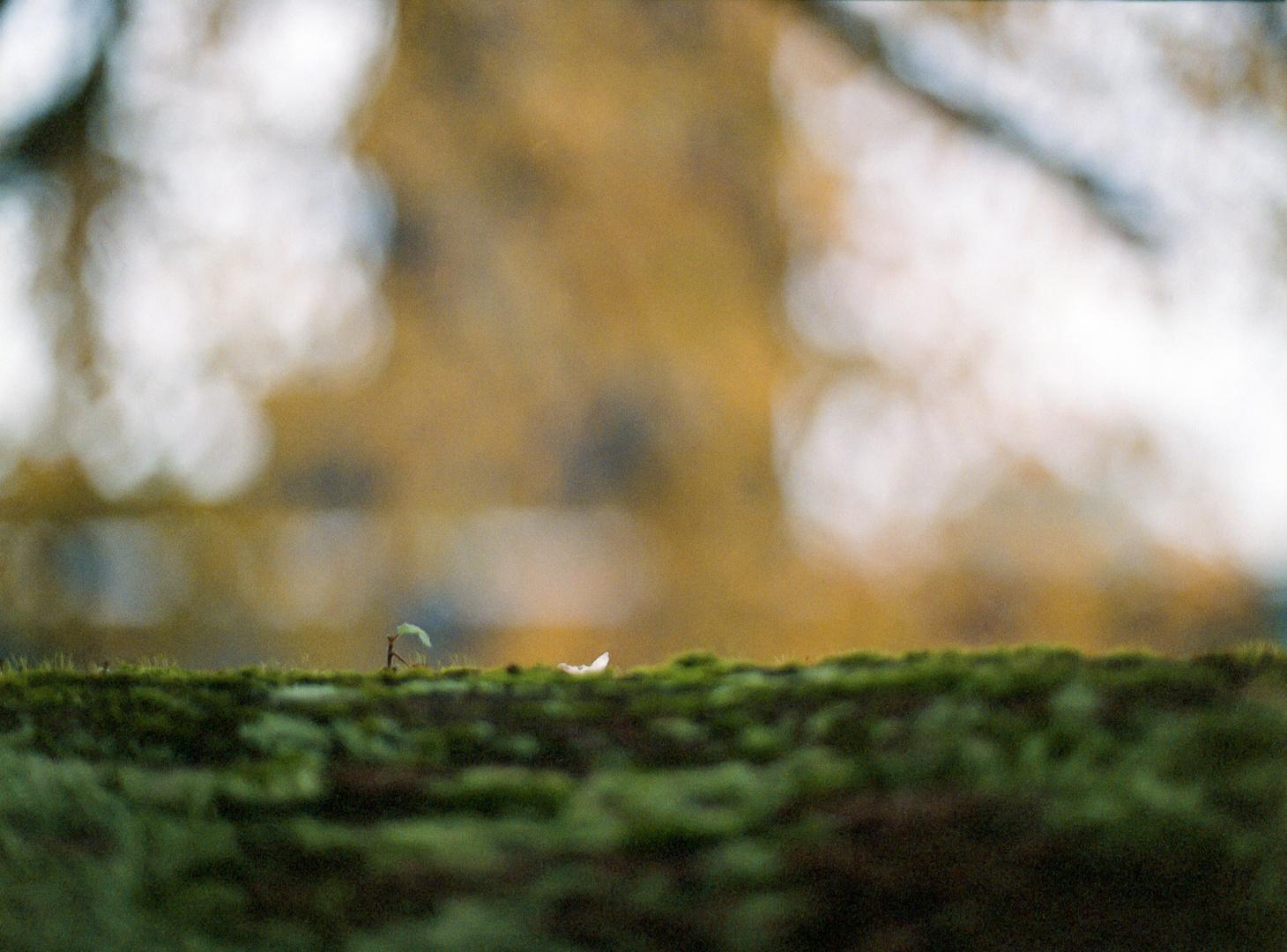zollverein_agfa_portrait160-009