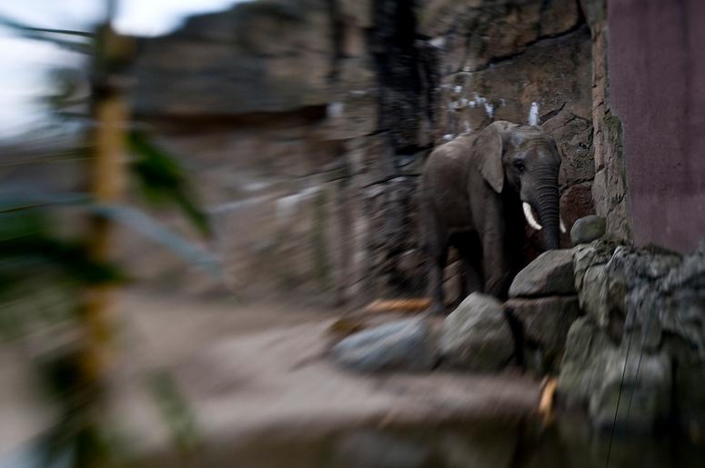 ..Zoo