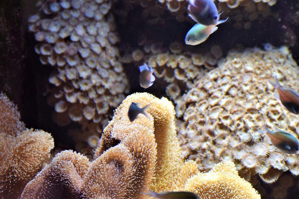 Aquarium Fische Berlin
