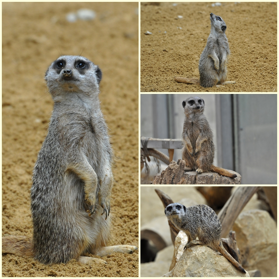 Zoo Augsburg Collage 6