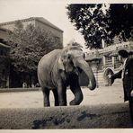 Zoo Berlin 1935