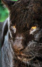 ... Zoo Blick III ...