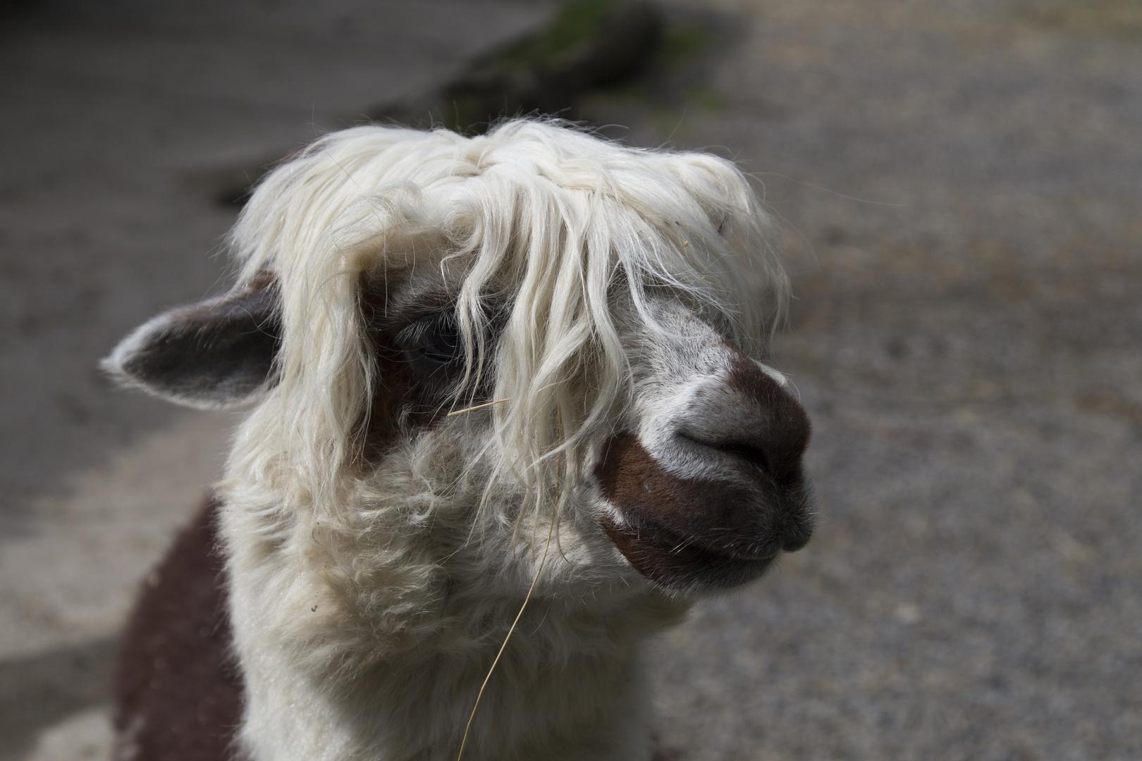 Zoo Bretten Friseur notwendig