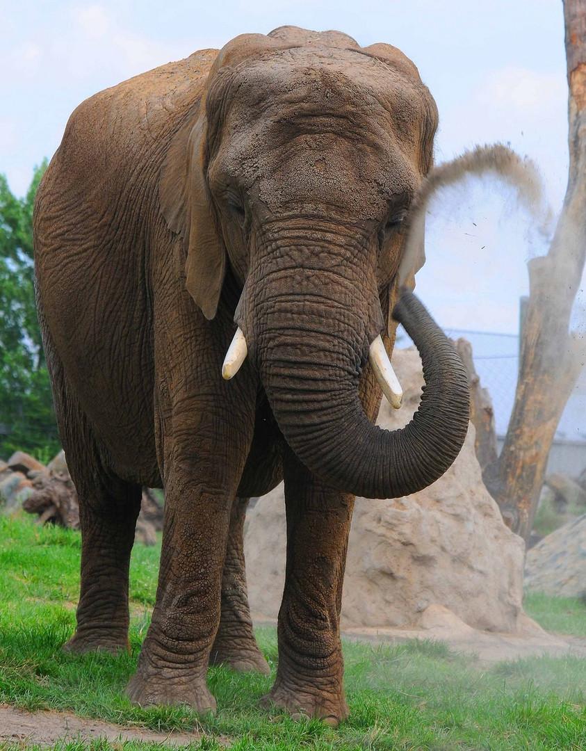 Zoo de Gramby
