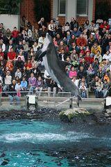 Zoo Duisburg Delphin