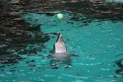 Zoo Duisburg Delphin und der Ball