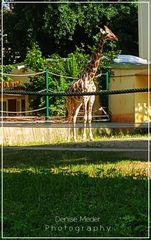 Zoo Frankfurt 2018
