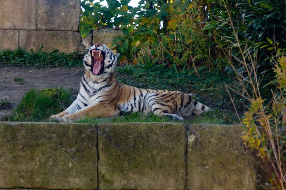 Zoo Hannover Oktober 2012 #16