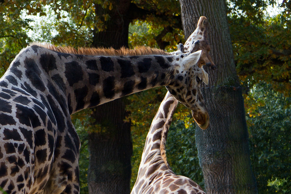 Zoo Hannover Oktober 2012 #4