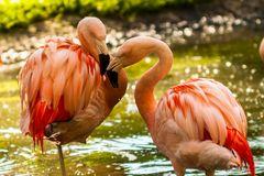 Zoo Hellbrunn 4