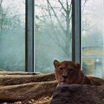 Zoo-Ho 1