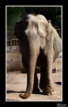 Zoo I