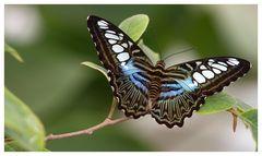 [Zoo Krefeld: Das neue Schmetterlingshaus II]