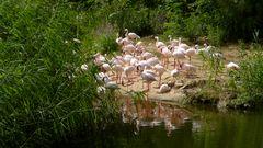 Zoo Leipzig II
