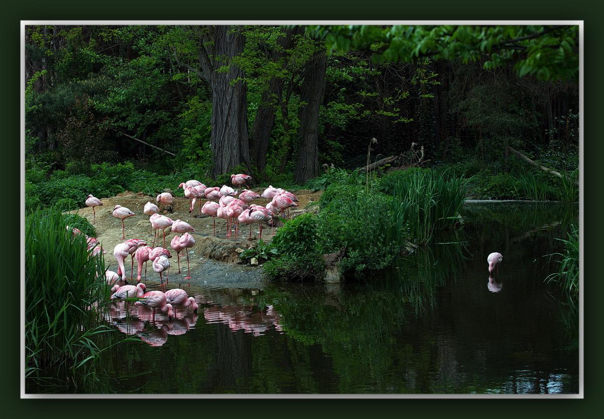 Zoo-Leipzig(Flamingos)