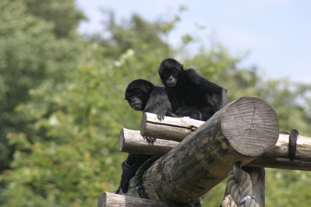 Zoo Osnabrück No.2