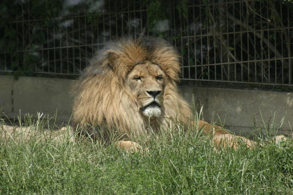 Zoo Osnabrück No.3