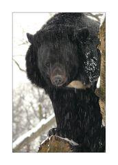 Zoo-Winter #1
