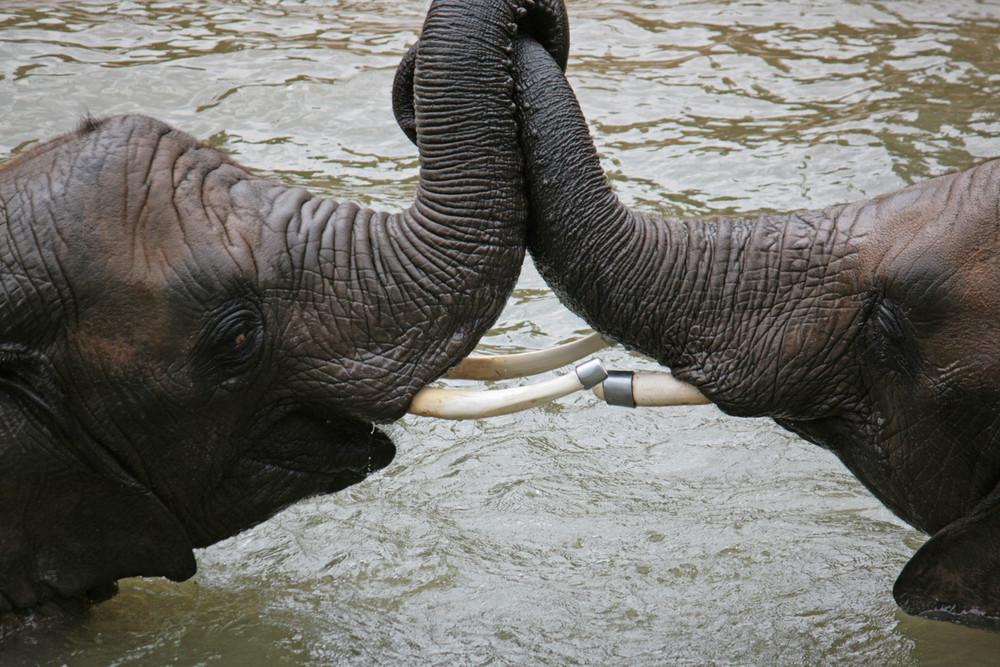 Zoogeschichten 1