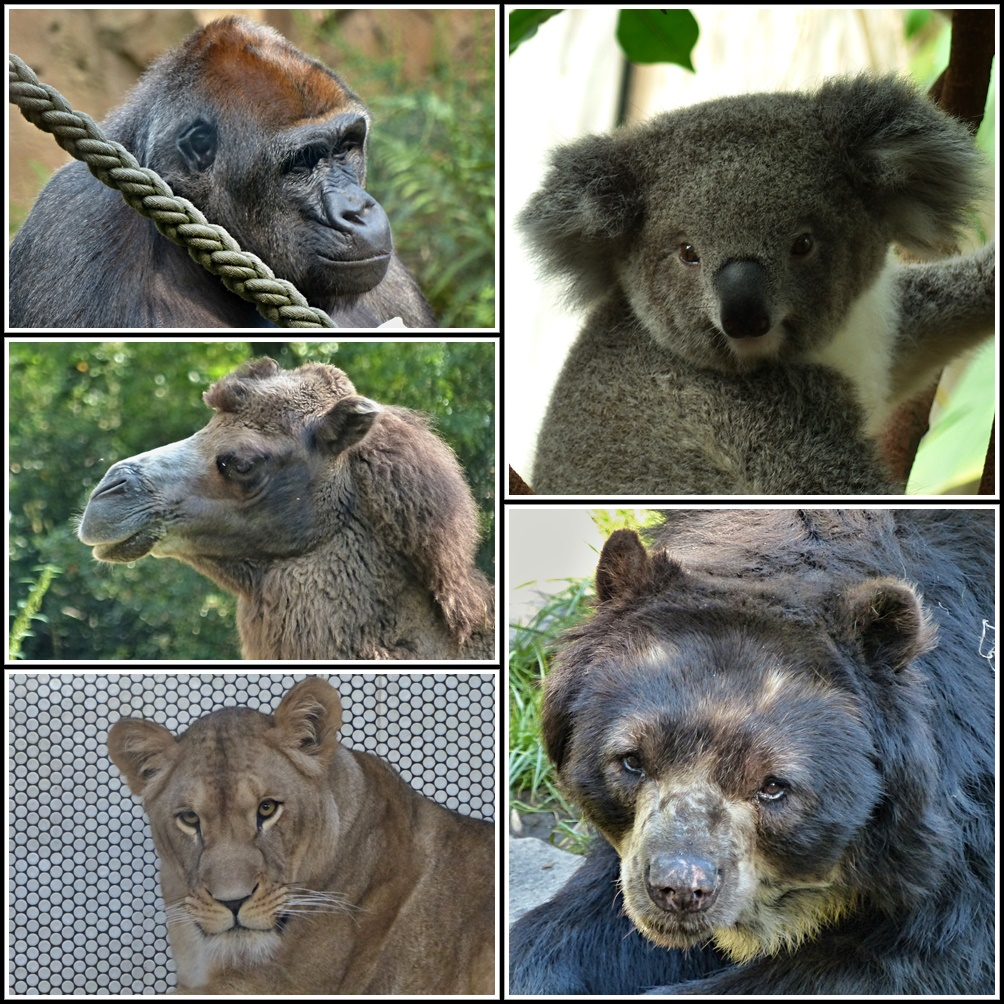 Tiere Im Zoo Liste