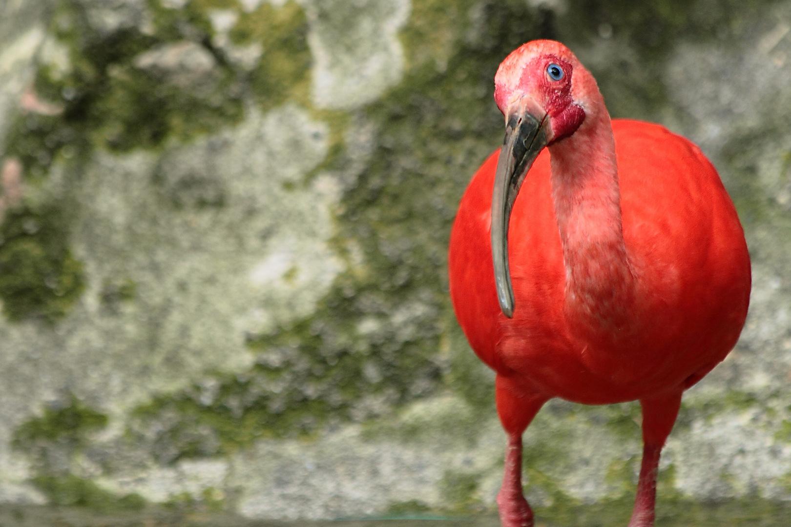 Zoologico Cali, Colombia 2