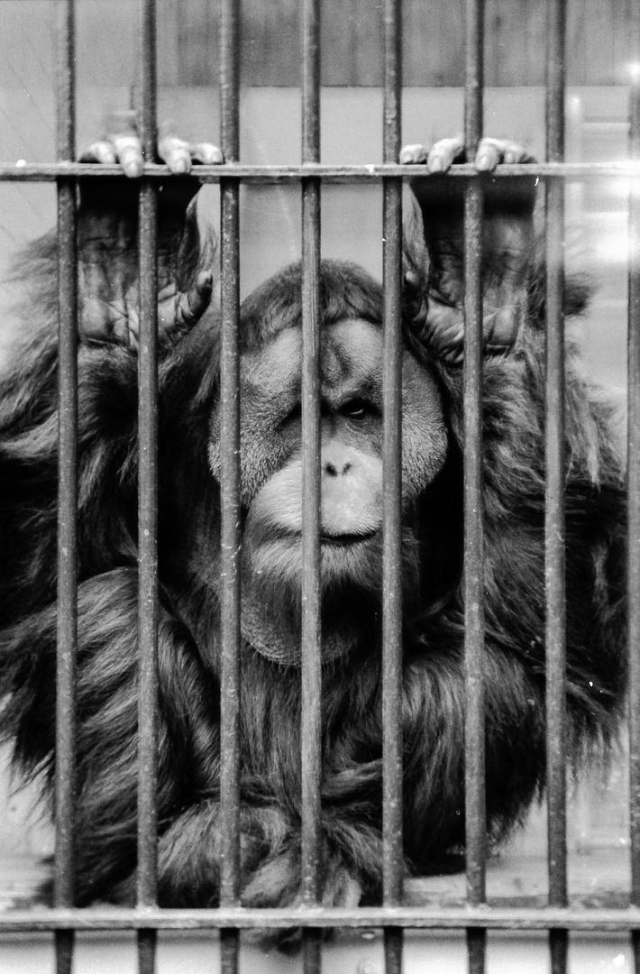Zoologischer Garten Berlin 1980 | Hinter Gittern