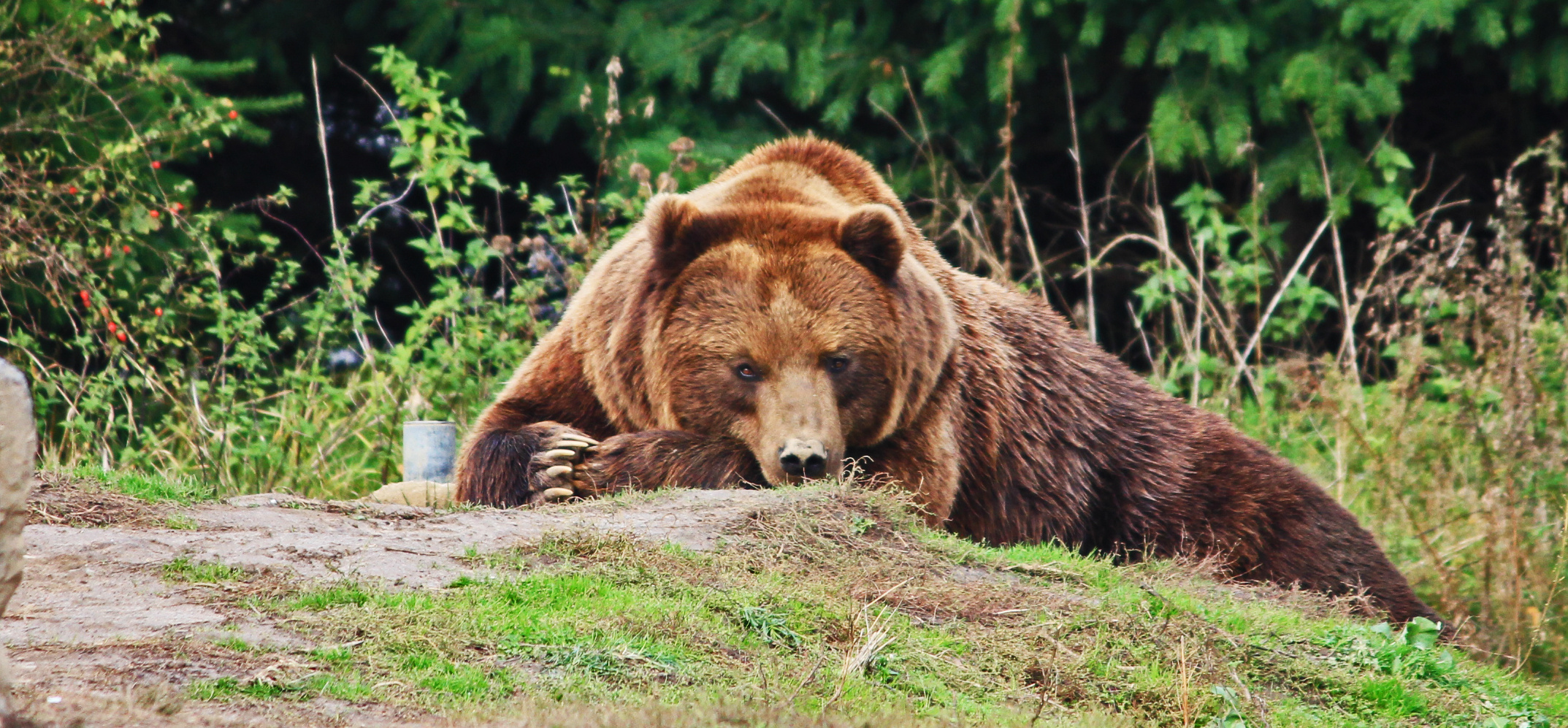 Zoom Erlebniswelt - Braunbär